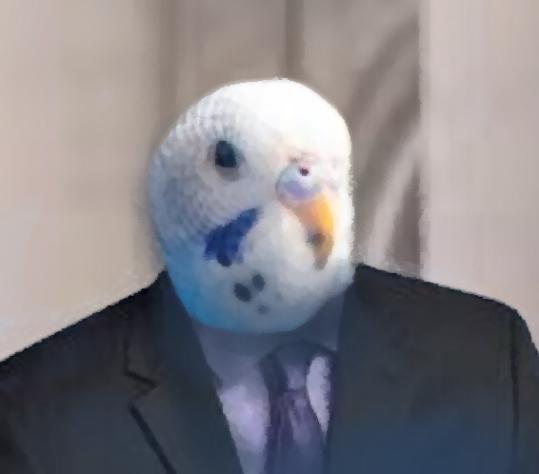 birdyxx